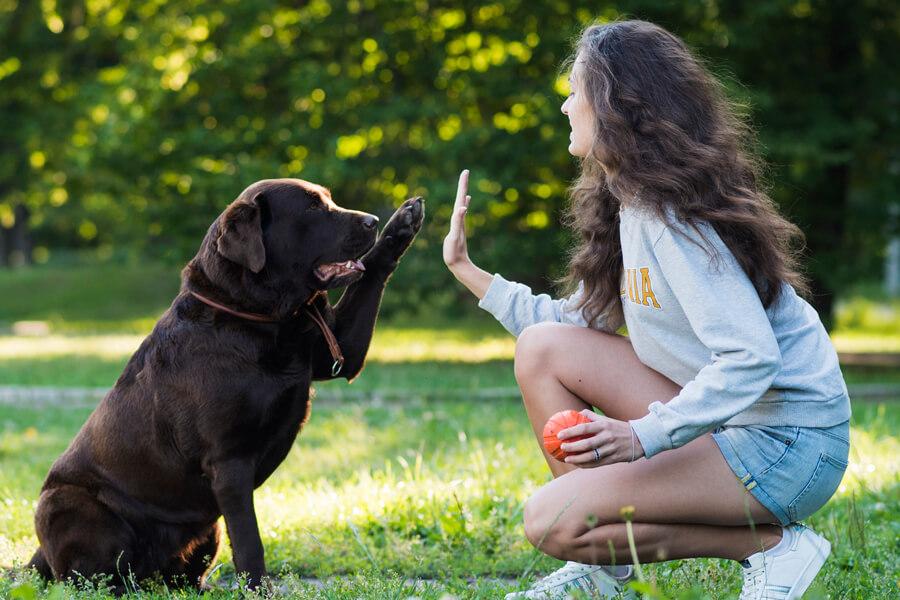 ฝึกสุนัขด้วยตัวเอง