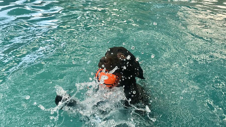 สระว่ายน้ำสุนัข