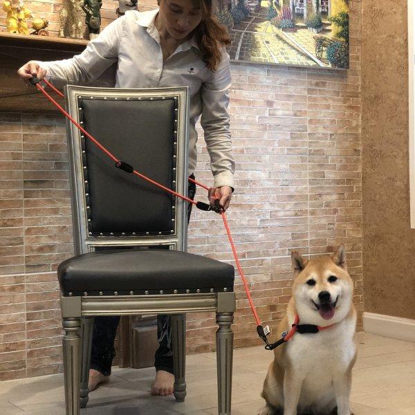 ปลอกคอสุนัข Coach Collar ใช้คู่กับสายจูงสุนัข