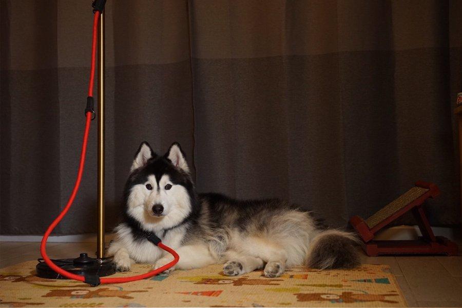 สายจูงสุนัข อเนกประสงค์ Joey Leash