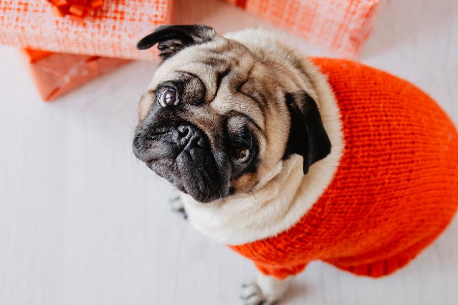 เหตุใดสุนัขพันธุ์หลายพันธุ์จึงมีลักษณะผิวหนังหรือส่วนหัวที่ย่น