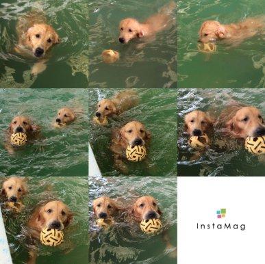 สระว่ายน้ำสุนัข Jojo House Dog Master