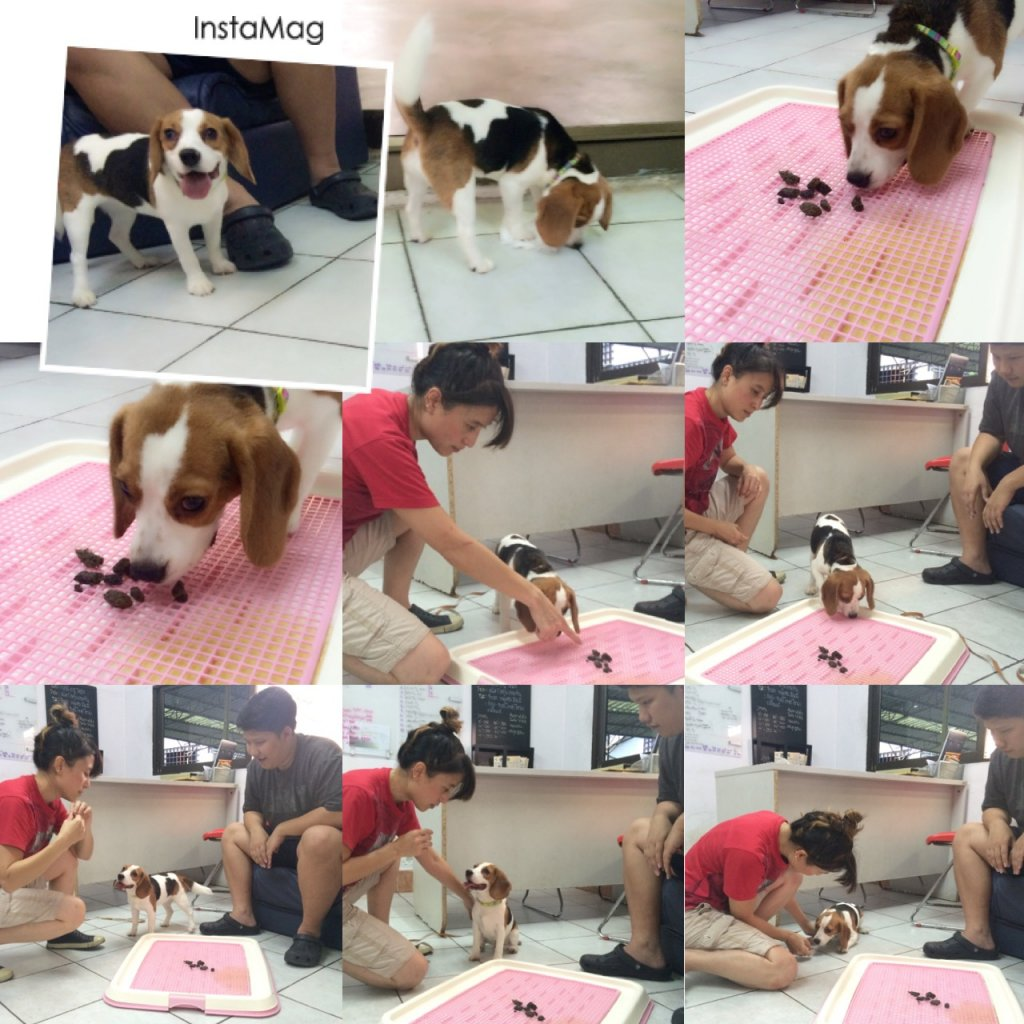 โรงเรียนฝึกสุนัข Jojo House Dog Master