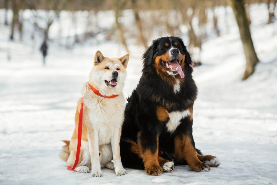 เตรียมตัวดูแลสุนัขของคุณยังไงกับหน้าหนาวที่ใกล้มาถึง
