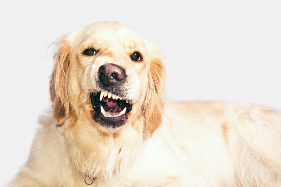 สุนัขเห่ามากเกินไป