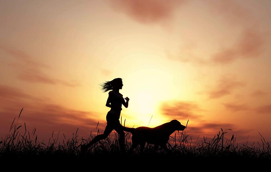 เหตุผลที่คุณควรพาสุนัขไปออกกำลังกาย