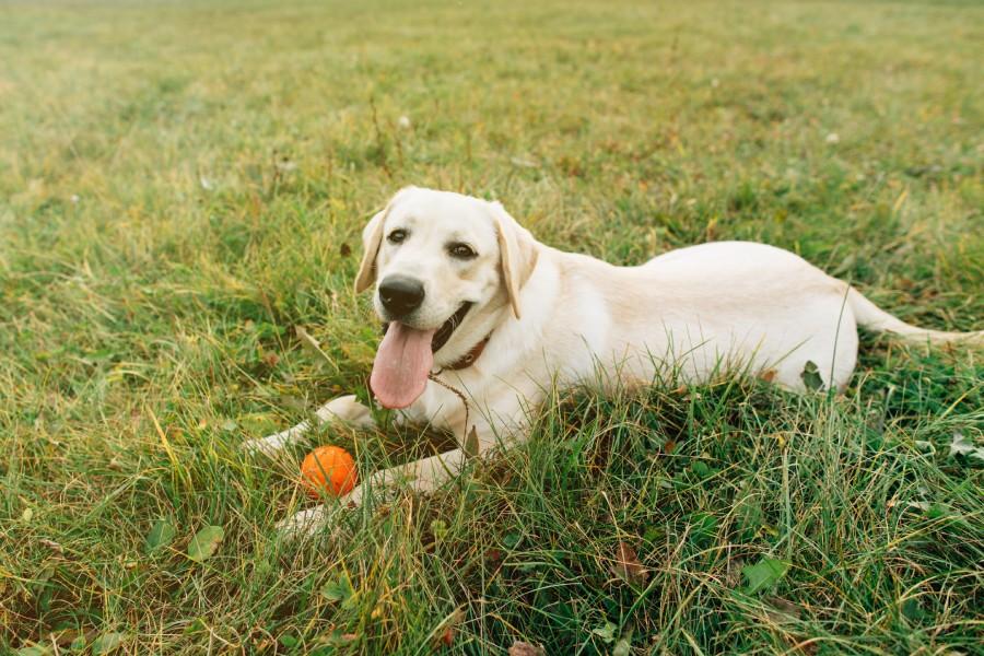สุนัขที่อายุยืนที่สุดในโลก