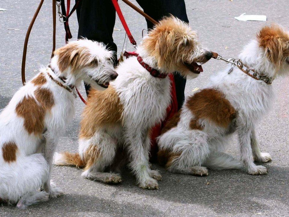 เลือกสายจูงสุนัข