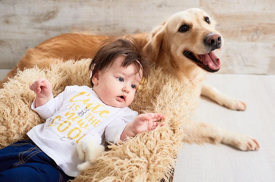 ฝึกสุนัขให้เข้ากับเด็ก