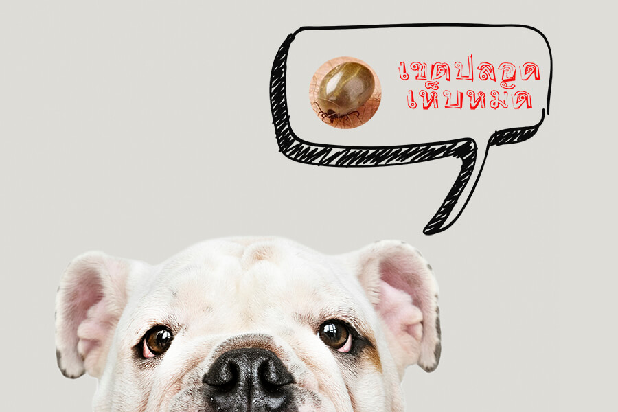 เห็บหมัด กับ โรคพยาธิเม็ดเลือดในสุนัข เกี่ยวข้องกันอย่างไร ใครเลี้ยงสุนัขต้องอ่าน!