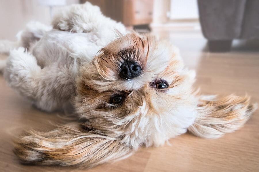 ภูมิแพ้ในสุนัข_แพ้จากการสัมผัส