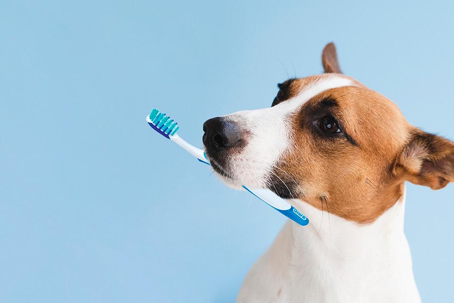 ฝึกสุนัขแปรงฟัน