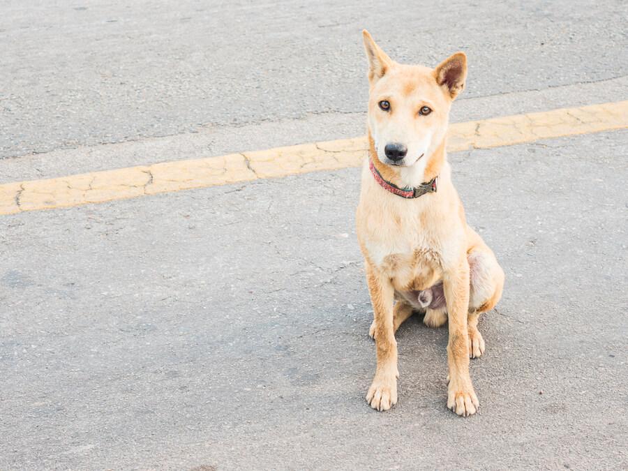 5 อย่างที่ไม่ควรทำกับสุนัขสายพันธุ์ไทย