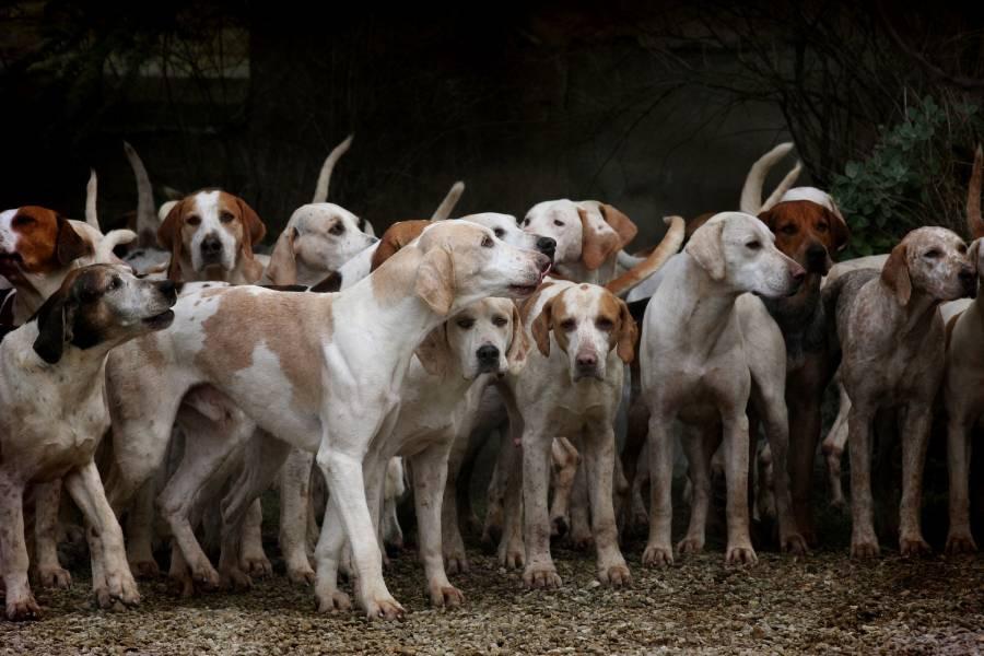 โรคอุปทานหมู่ในสุนัขที่มักพบเห็นได้บ่อย