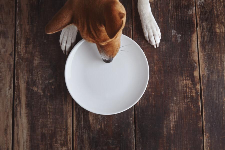 สุนัขหวงอาหาร