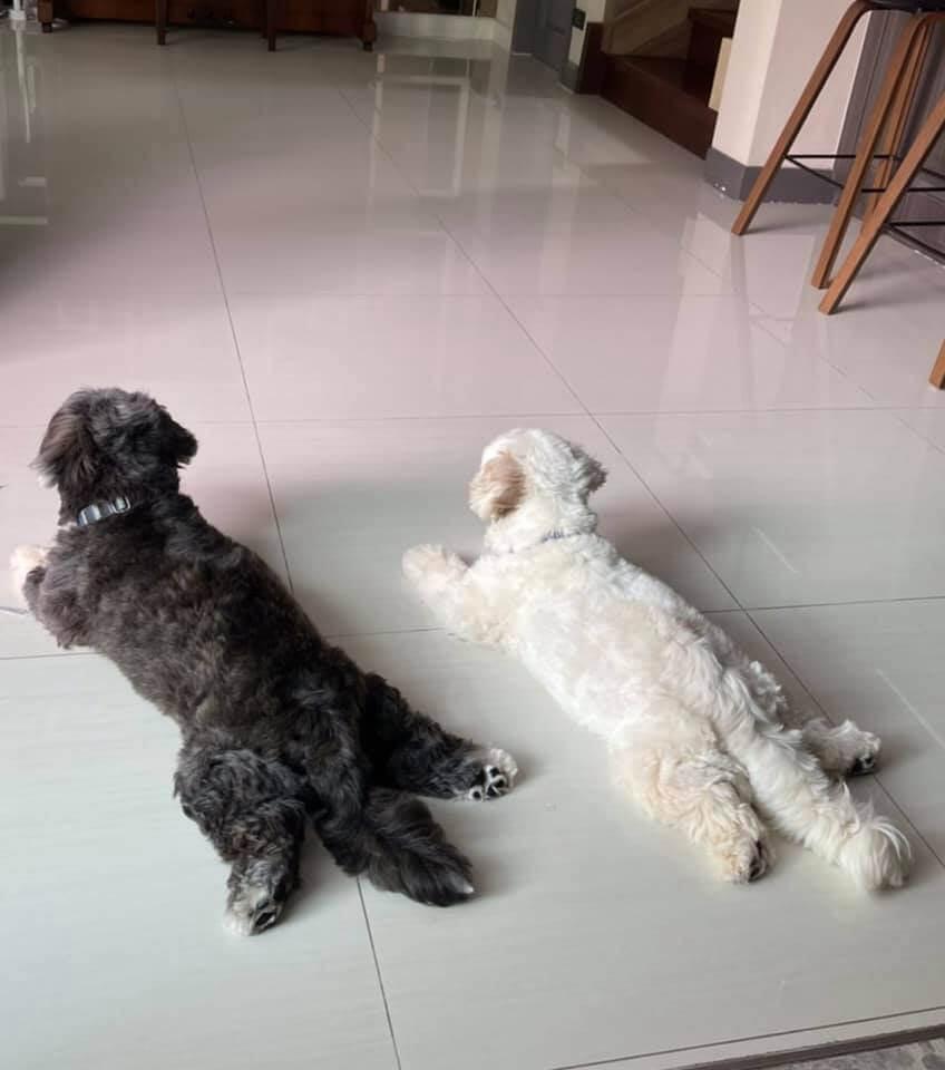 หาบ้านให้น้องหมา_โจอี้_ฟีบี้