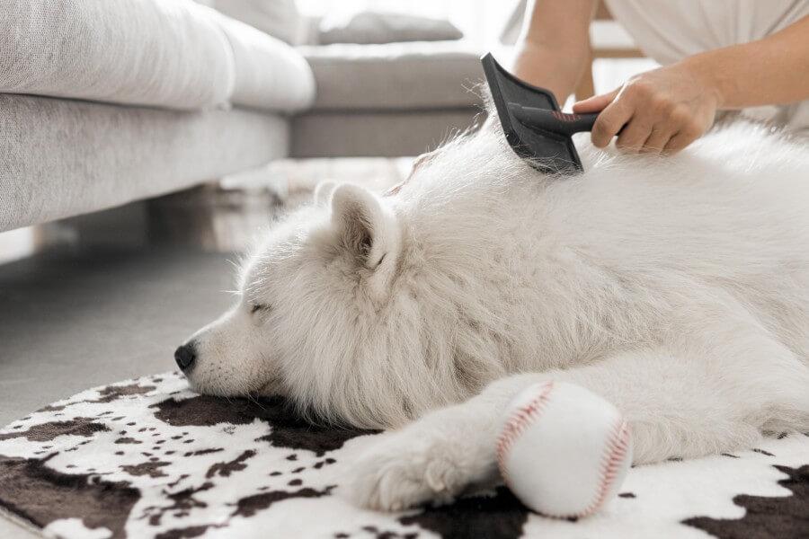 เลี้ยงสุนัขในบ้าน ผิวหนังและขนต้องสะอาดอยู่เสมอ