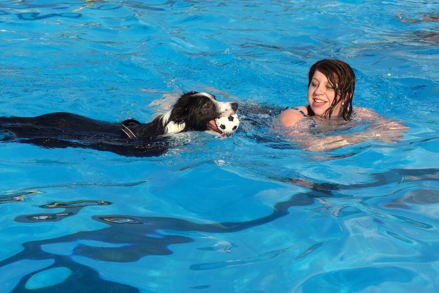 การว่ายน้ำช่วยฝึกให้สุนัขไว้ใจมนุษย์มากขึ้น