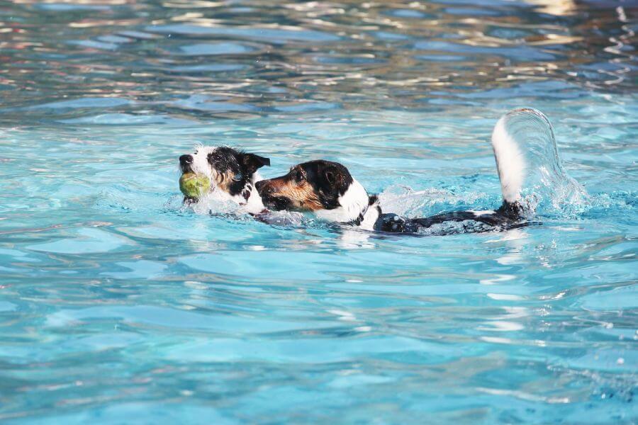 การว่ายน้ำช่วยให้การฝึกสุนัขมีประสิทธิภาพมากขึ้น
