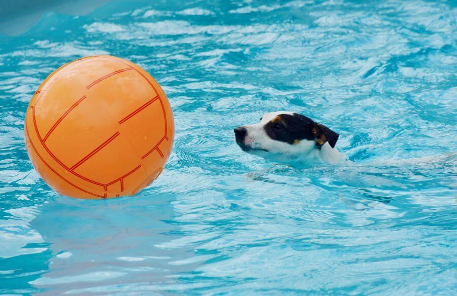 การว่ายน้ำช่วยให้สุนัขคลายเครียด